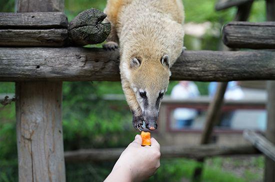 Soigneur d'un jour au Zoo !